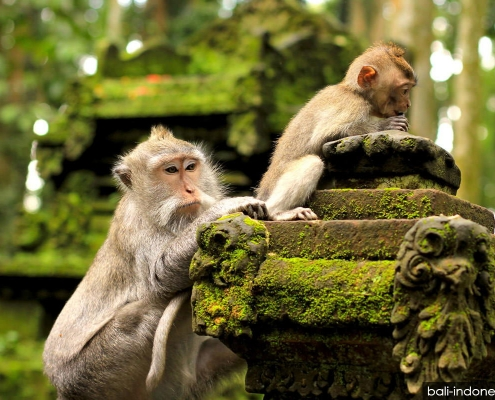 Sangeh Monkey Forest